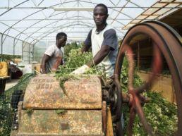 """Migranti agricoltori con il """"social farming"""" al Corno alle Scale"""